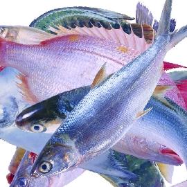 孕妇吃鱼有什么好处